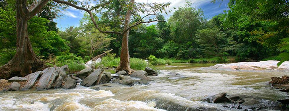 Kumbuk River, Buttala