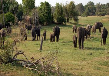 Winreach Leala Resort, Sigiriya