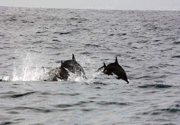 Palm Villa, Mirissa