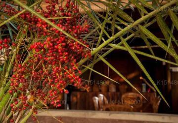 Baywatch Eco Resort Village, Kalpitiya