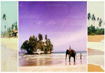 Paradise Holidays, Bambalapitiya