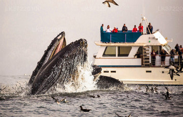 Whale Watching Boat Tour from Trincomalee