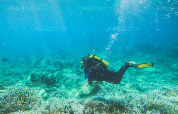Scuba Diving from Trincomalee