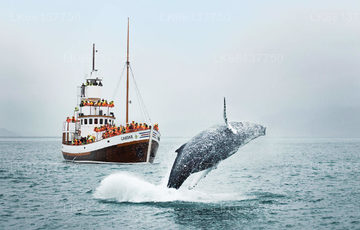 Whale Watching from Trincomalee
