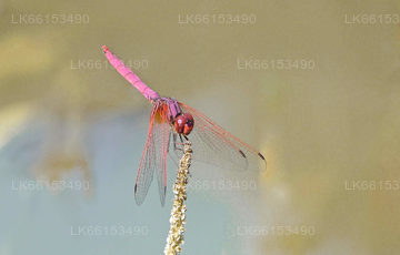 Dragonfly Watching