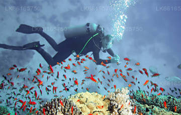 Diving from Trincomalee