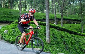 Tea Fields by Bicycle from Kandy